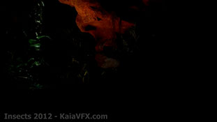 KaiaVFX.com - Visual Effects - Insects.mp4-00033