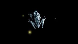 Teaser Animation - Fringe Frog.mp4-00072