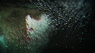 Fringe - Science Channel Promo End Tag.mp4